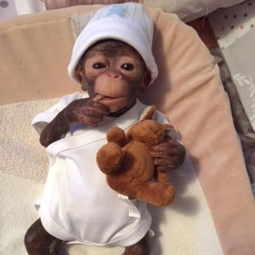 Coco The Silicone Baby Monkey